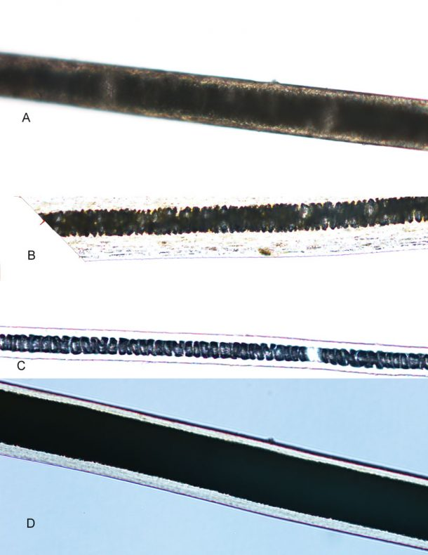 Hair fibers from each respective sampled area, GH024606; shown at 200x magnification. Image copyright Te Papa.