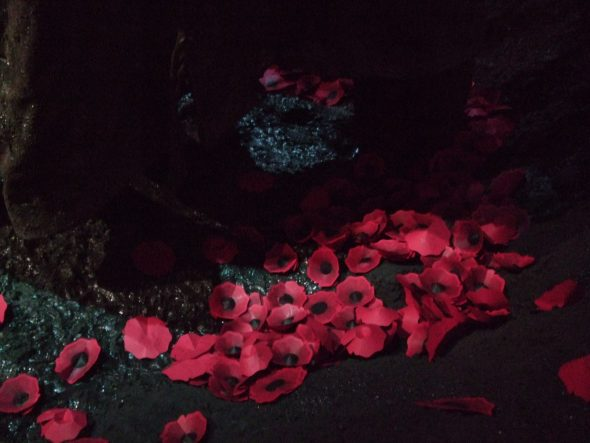 End of the day 18 April 2016. Poppies in bottom of Cecil Malthus's shell crater. Gallipoli. The scale of our war. Photo by Kirstie Ross