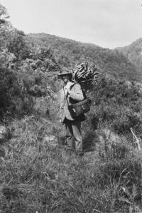 Reginald Oliver collecting plants at Wilmot Pass, Fiordland, March 1927. Image by J.T. Salmon, Dominion Museum. Te Papa (MA_B.014931)