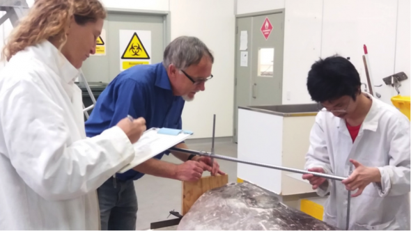 Marianne Nyegaard, Andrew Stewart and Te Papa intern Etsuro Suwai measuring a specimen of the new sunfish. (Photo Salme Kortet, Te Papa).