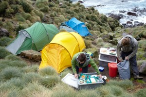 The campsite at the albatross colony on Hautere/Solander Island
