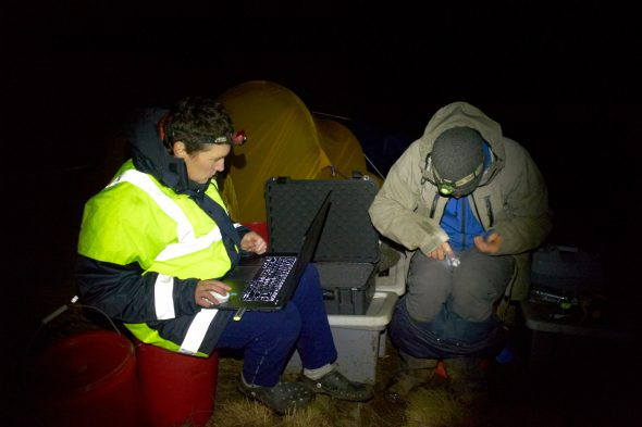 Susan and Tim download data from loggers retrieved from birds returning to the colony after their trip to sea. Photo Jean-Claude Stahl, Copyright Te Papa.