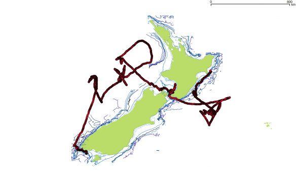 GPS track of a Buller's Albatross tracked from Solander Island
