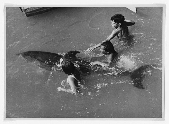 Children playing with Opo (a bottlenose dolphin, Tursiops truncatus), Opononi, 1956. Image: Eric Lee-Johnson (Te Papa O.007809/04).