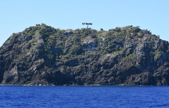 The booby trap – Napier Islet (Kermadec Islands), showing where the red-footed boobies were roosting. Image: Steve Wood