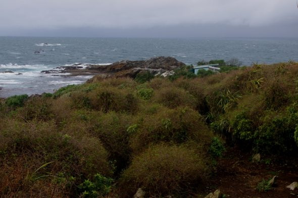 The eastern end of Taumaka, showing tangles of Muehlenbeckia australis vine, and the small hut that we stayed in. Image: Colin Miskelly, Te Papa