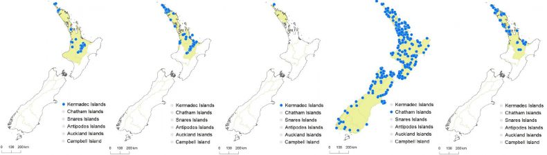Distribution maps of the five species of Thelypteridaceae that are indigenous to New Zealand. From left: Christella dentata; Cyclosorus interruptus; Macrothelypteris torresiana; Pneumatopteris pennigera; Thelypteris confluens. The greater cold tolerance of Pneumatopteris pennigera is clearly evident. All five species are also indigenous to other parts of the world. Maps © Landcare Research 2015 CC-BY.