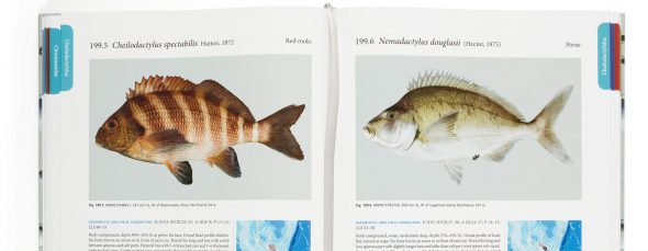 Internal pages from the Fishes of New Zealand book