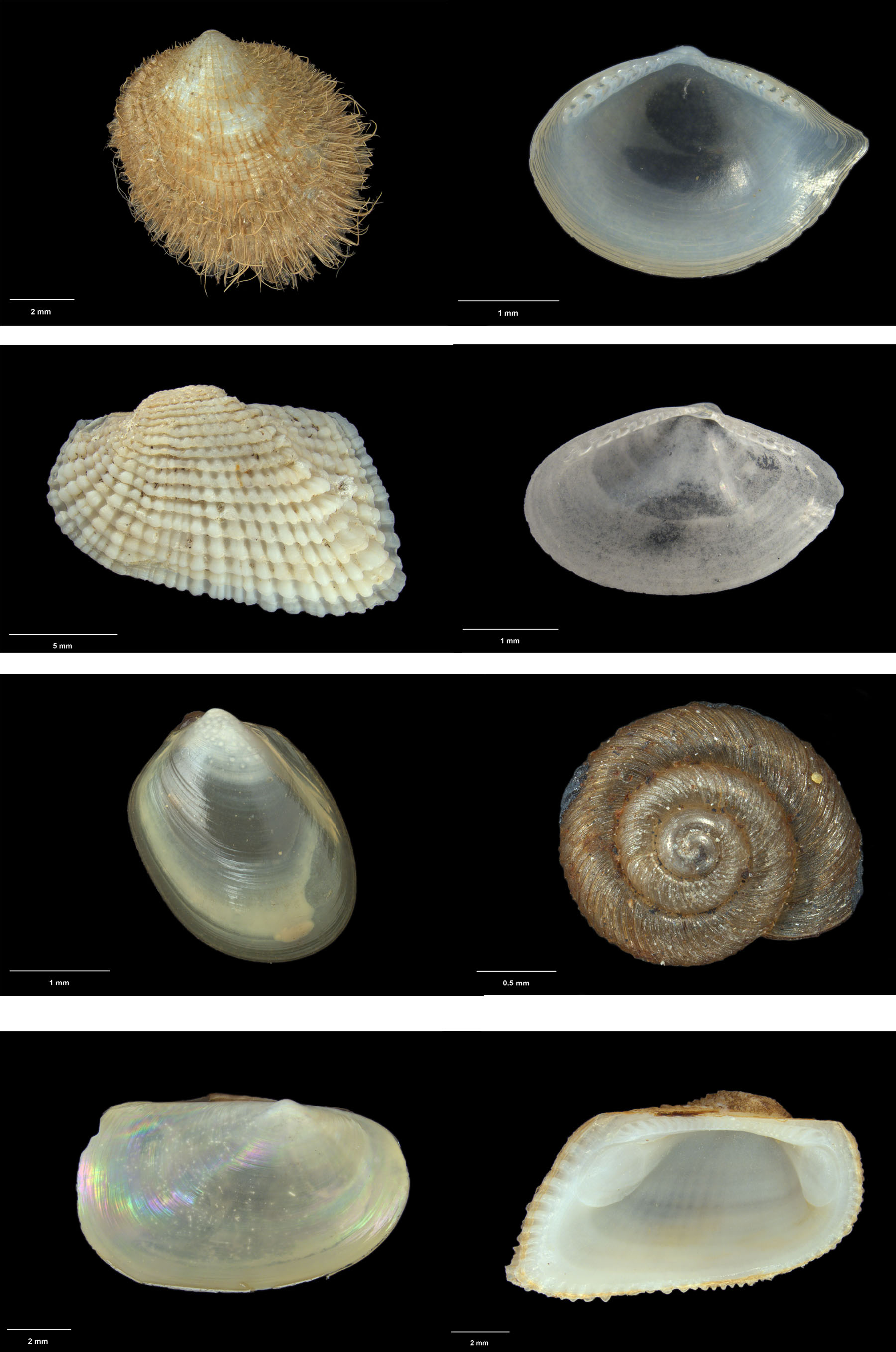 A selection of close up shell images produced with the new microscope using an image stacking process