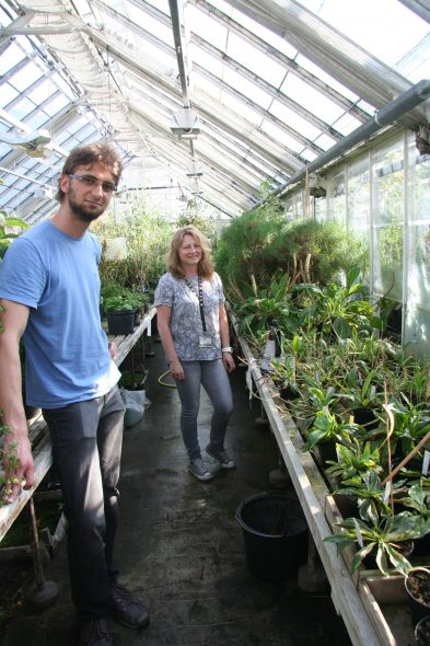 PhD student Gustavo Hassemer and Dr Nina Rønsted (Natural History Museum of Denmark) with Plantago plants for ongoing systematics research at the Botanic Garden in Copenhagen. Sept 2016. Photo by Heidi Meudt.