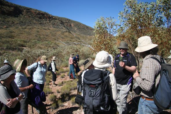 Conference field trip to the MacDonnell Ranges, where we got to experience the amazing central Australian flora first hand. The trip was led superbly by Dr Peter Jobson of the Northern Territory Herbarium in Alice Springs. Here Peter is holding one of the native species from the area and telling us about its distribution and taxonomy. Sept 2016. Photo by Heidi Meudt.