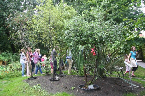Our tour group walking by the collection of New Zealand plants at the Oldenburg Botanic Garden. Note the plants are all in pots, and will be brought indoors during the cold winter months. Sept 2016. Photo by Heidi Meudt.