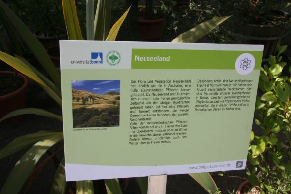 Sign at the Bonn Botanic Gardens highlighting New Zealand and its plants. Sept 2016. Photo by Heidi Meudt.