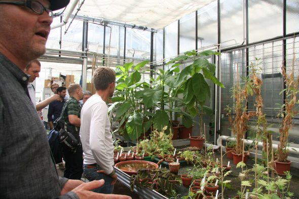 Director Max Weigend ome of the research collection of plants at the Bonn Botanic Gardens. Sept 2016. Photo by Heidi Meudt.