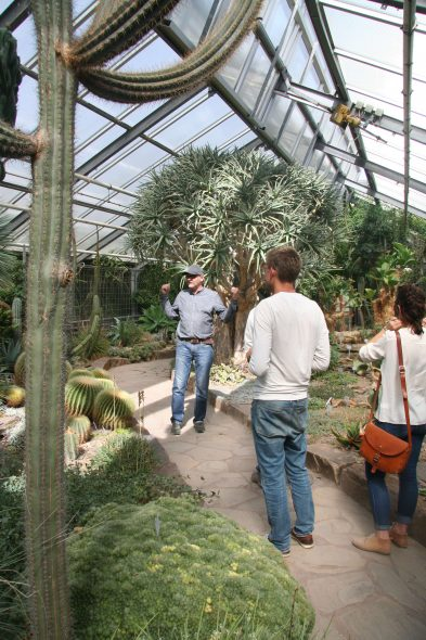 "Checking out some of the ""exotic"" plants in the glasshouses at Bonn Botanic Garden with director Dr Max Weigend. New World succulents on the left, and Old World succulents on the right. Sept 2016. Photo by Heidi Meudt."