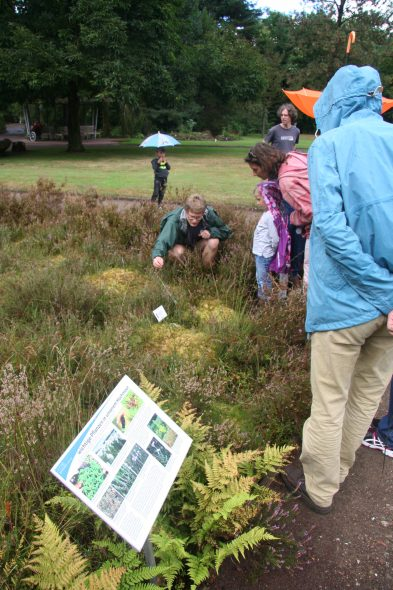 Our excellent tour guide Simon Pfanzelt showing us some fascinating native bog plants in a recreated German bog habitat. Sept 2016. Photo by Heidi Meudt.
