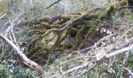 This point in the track marked where the clearing of fallen trees stopped.