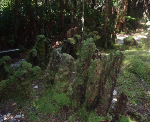 The remains of Richard Henry's kakapo and kiwi pen on Pigeon Island, Dusky Sound. Image: Colin Miskelly, Te Papa