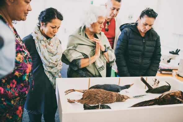Feather Identification Workshop participants, Whanganui Regional Museum, 2016