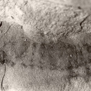 Fossil of a march fly