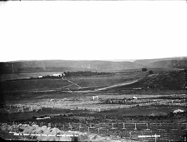 Sheep Drafting, Shag Valley Station, Otago, NZ, 1876-1885, Otago, by William Hart, Hart, Campbell & Co. Purchased 1943. Te Papa (C.017733)