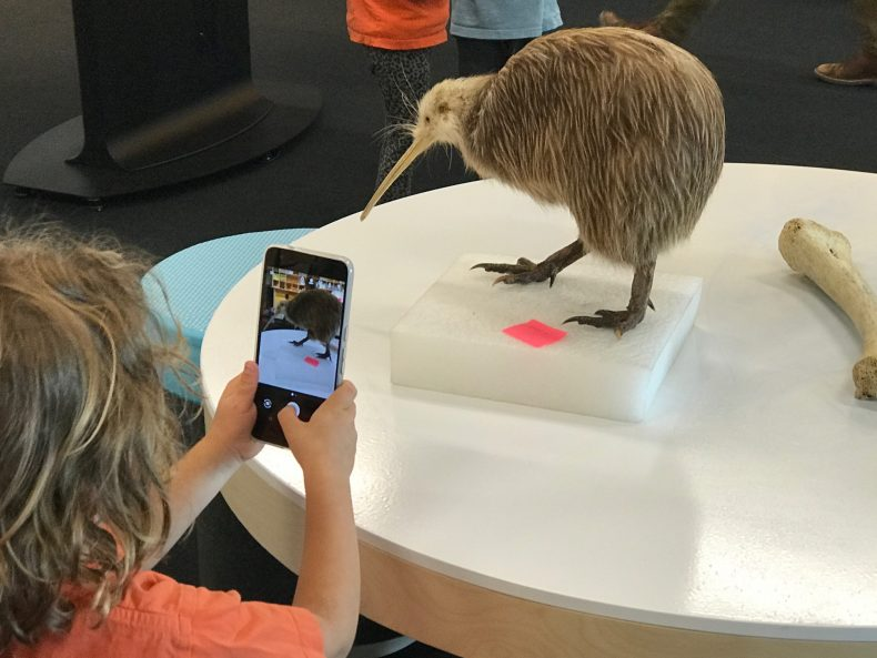 A child takes a photograph of a Kiwi