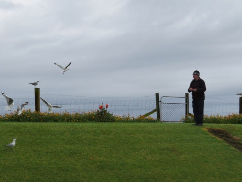 Ray McNamara feeding gulls in his backyard