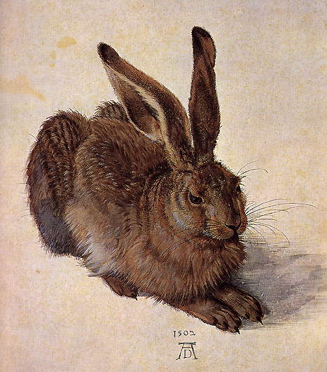 A_Young_Hare,_Albrect_Durer