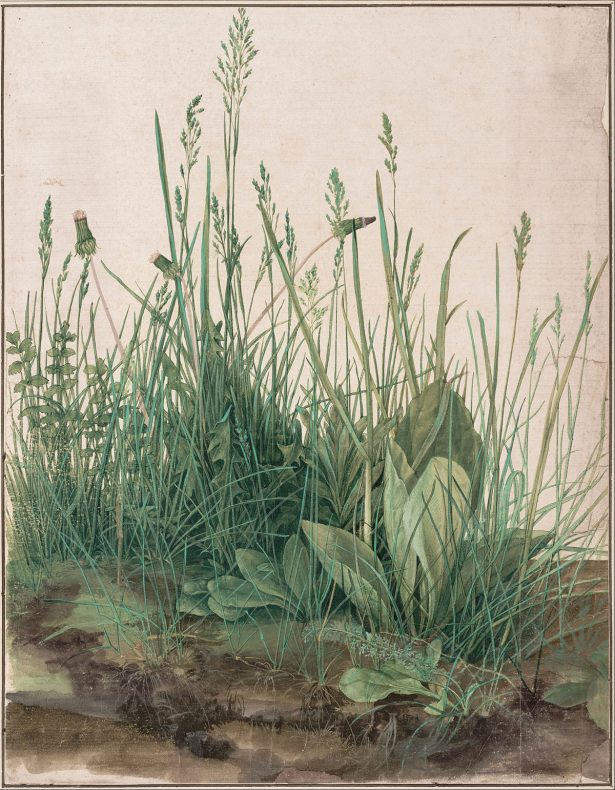 The_Large_Piece_of_Turf,_1503_-_Google_Art_Project