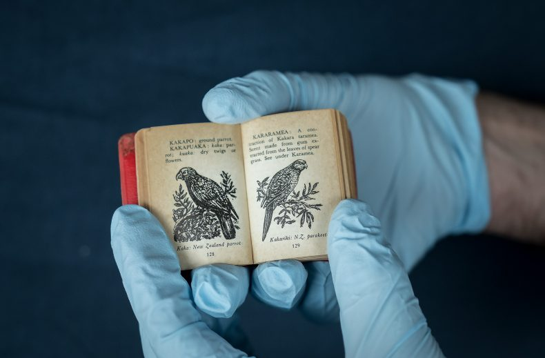 Pages of a tiny book with kea drawings inside