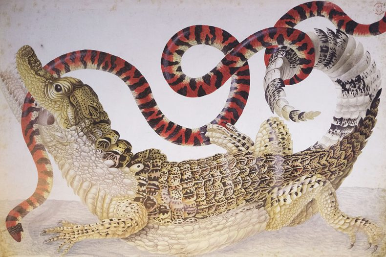 Detail from The Surinam Album