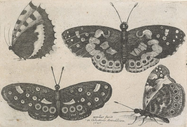 Etching of four butterflies