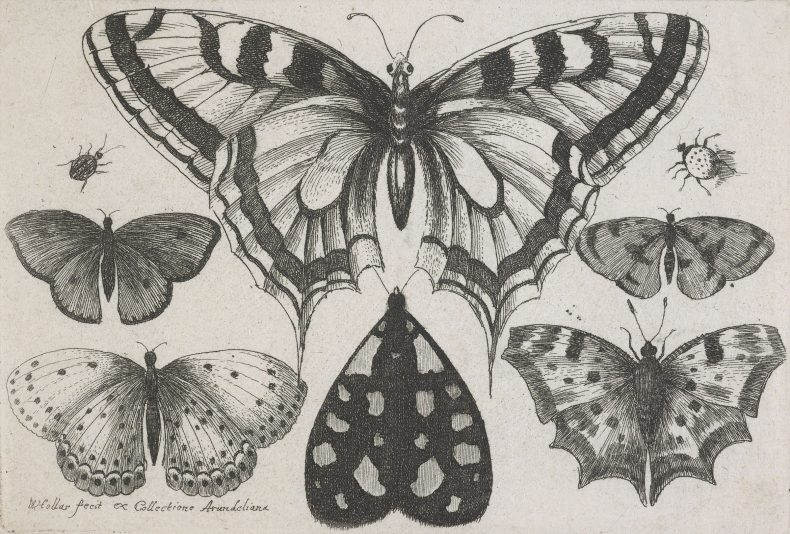 Etchings of butterflies and beatles