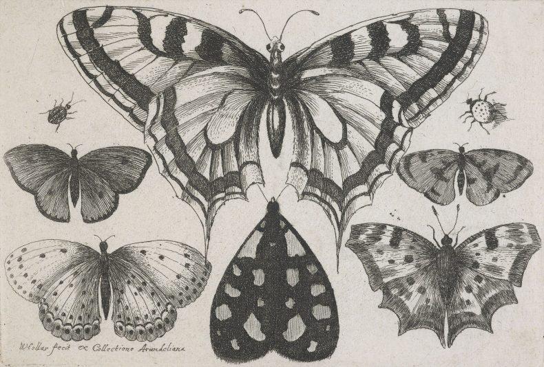 Etchings of butterflies and beatles