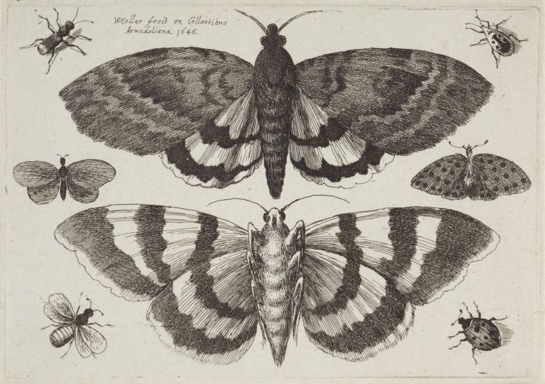 Etchings of two moths and six insects