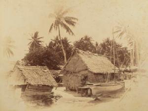 O.037817 Beach Penrhyn.  Andrew Thomas, 1886, Penrhyn Atoll (Tongareva)