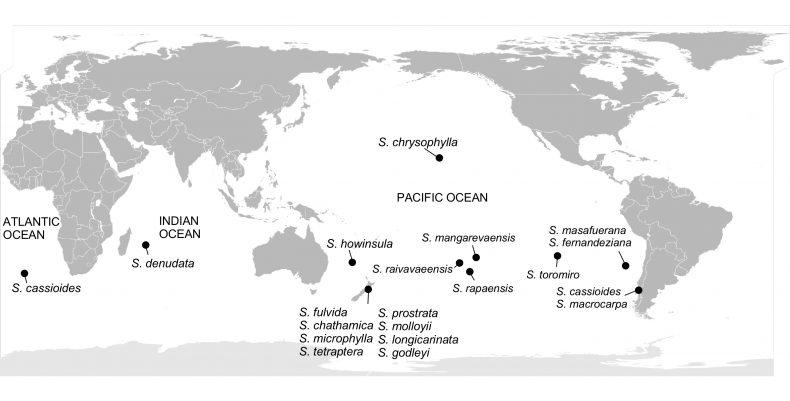 Sophora map
