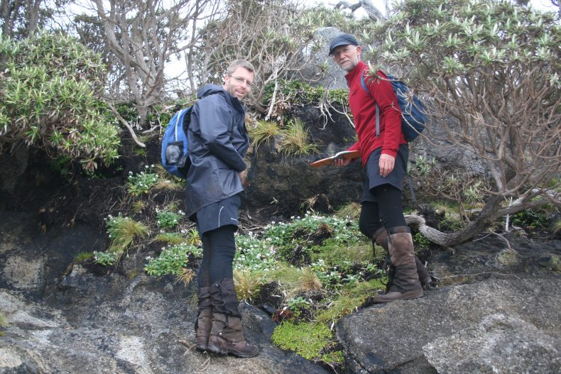 Ant and John with Myosotis rakiura at Doughboy Bay, December 2016. Photo by Heidi Meudt @ Te Papa. http://collections.tepapa.govt.nz/Object/1591979