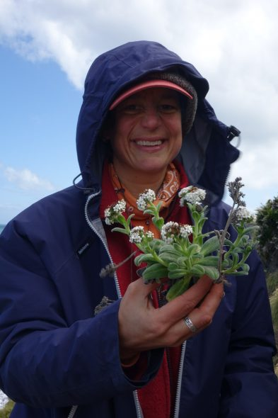 Heidi making a research collection of Myosotis rakiura
