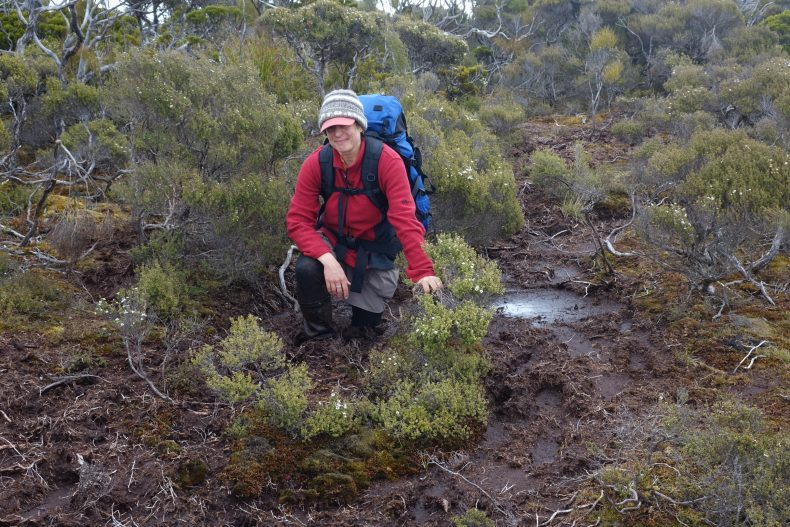 A little mud won't stop us finding the forget-me-nots... Although it might slow us down a bit. Here I am up to my knees in mud on the way to Doughboy Hut, Stewart Island