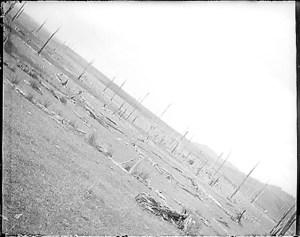 Empty paddock
