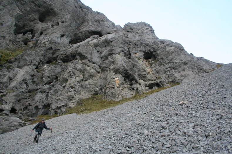 Ant crossing the scree