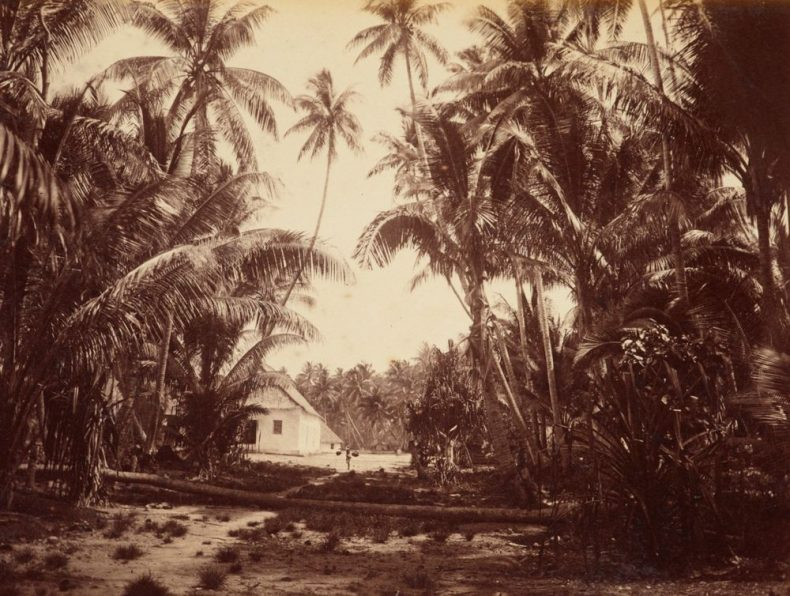 Funafuti. From the album: Views in the Pacific Islands