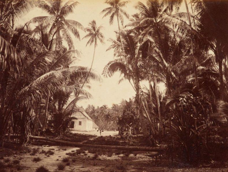 Funafuti. From the album: Views in the Pacific Islands
