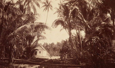 Black and white photograph of palm trees and a small house