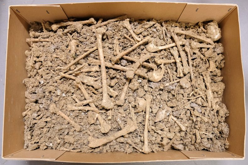 Samples - bones and dirt