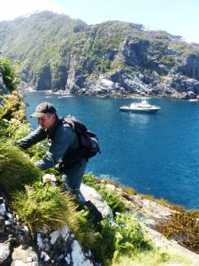 Colin Miskelly searching for petrel burrows on one of the 'Fingers' of Five Fingers Peninsula, Resolution Island, with the Southern Winds below. Photo by Alan Tennyson. Te Papa