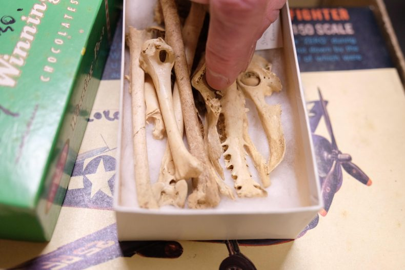 Fossilised bone specimens in a variety of different boxes