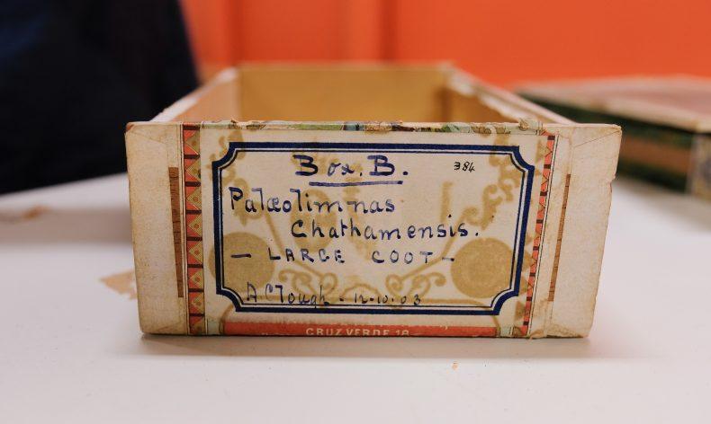 1936 cigar box used to house Coot bones. Photo by Rachael Hockridge. Te Papa