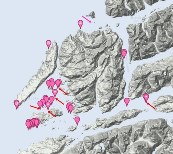 Sites where flax weevil feeding sign was noted in Dusky Sound in November 2016, and on islets off the outer coast of Resolution Island in November 2017. The pink arrow shows the only known Fiordland site before 2016. Red arrows show islands where live or dead flax weevils were found. Map based on NatureWatch sightings contributed by the Te Papa and DOC teams.